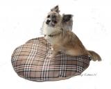 Hunde Liegekissen oval English Style